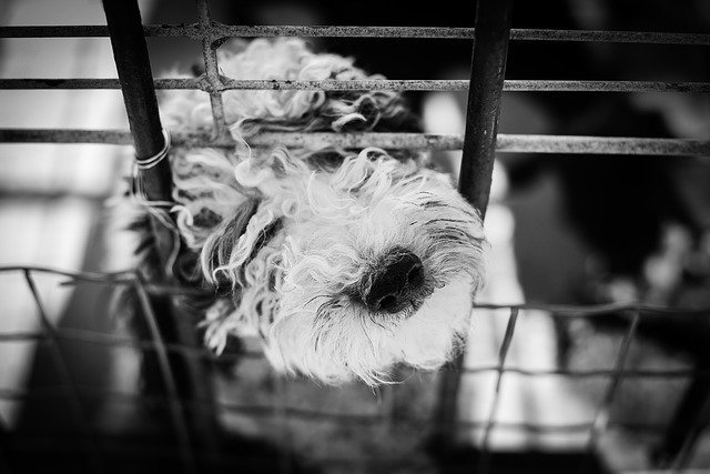 Dogs snout poking through crate.