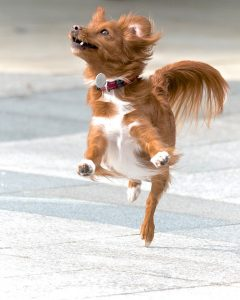 Dancing dog.