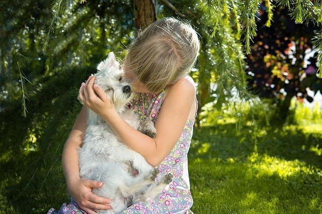 Girl hugging and kissing her west highland terrier.