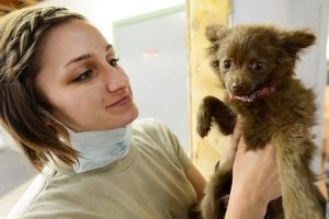 Veterinarian holding a young puppy.