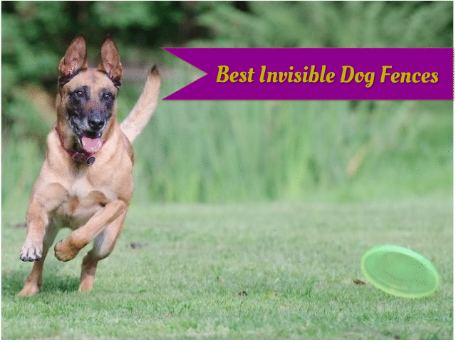 Best invisible dog fences.