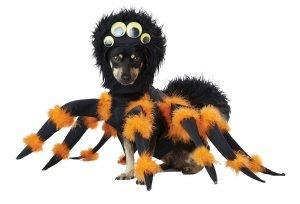 Black/Orange Spider PUP Dog Costume.