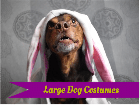 Large dog costumes for virtually any breed.