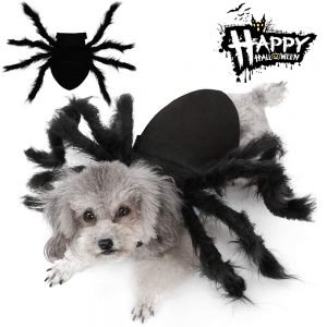 Malier Halloween Spider Outfit.