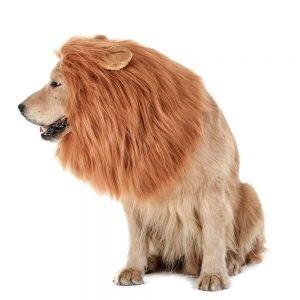 TOMSENN Dog Lion Mane.