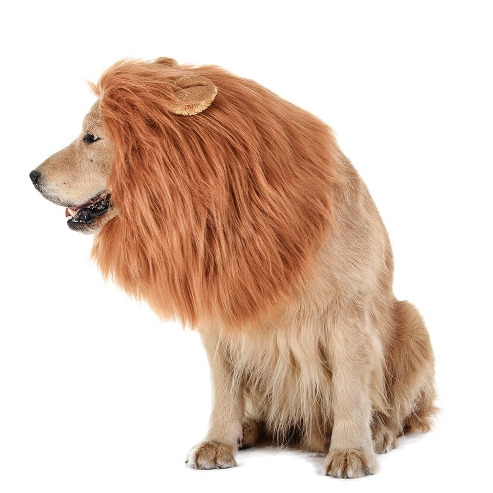 lion mane dog costume.