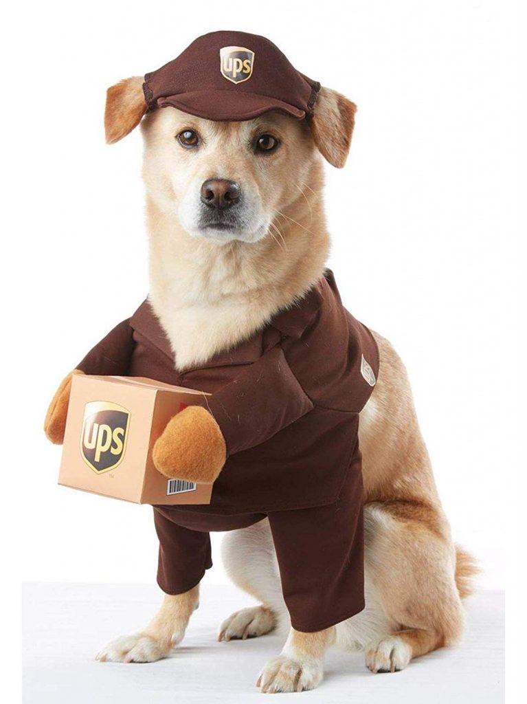 UPS dog costume.