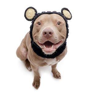 Zoo Snoods Black Bear Dog Costume.