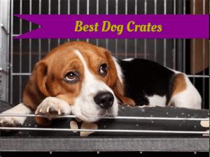 Best dog crates.