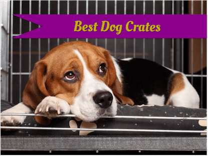 Best dog crates: heavy duty, escape proof, and indestructible.