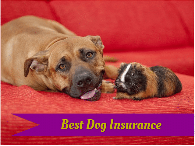The best pet insurance for dogs.