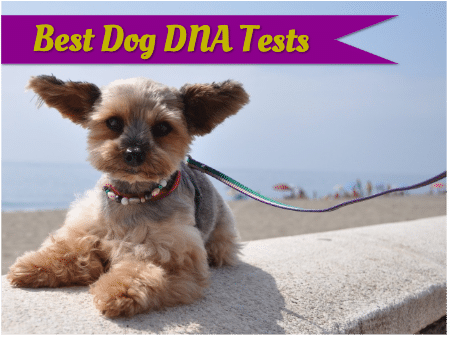 Our choices for the best dog DNA tests, complete with reviews.