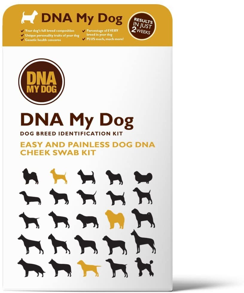 DNA My Dog Dog Breed Identification Kit - Easy and Painless Cheek Swab.