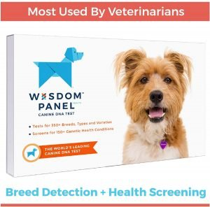 Wisdom Panel Dog DNA Test Kit for Breed, Ancestry, and Genetic Health Information.