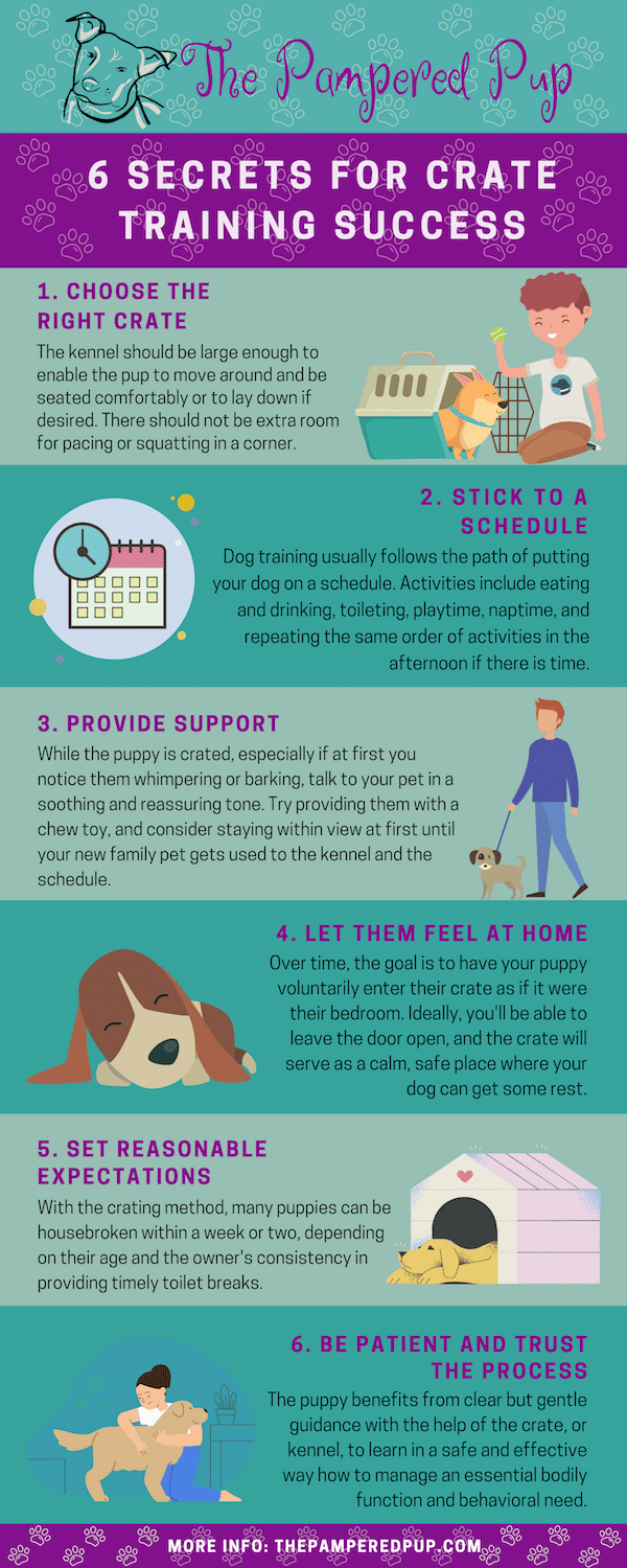 6 Secrets For Crate Training Success Infographic.