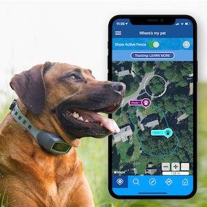 Best GPS dog fence: SpotOn.