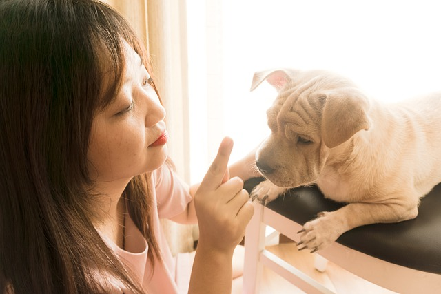 Woman playing with cute puppy.