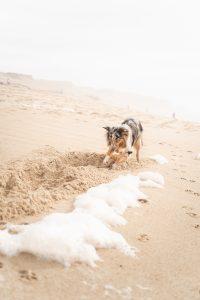 Dog digging sand.