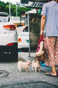 Two dogs with owner.