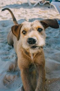 Dog with sand on mouth