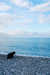Dog by the shore.