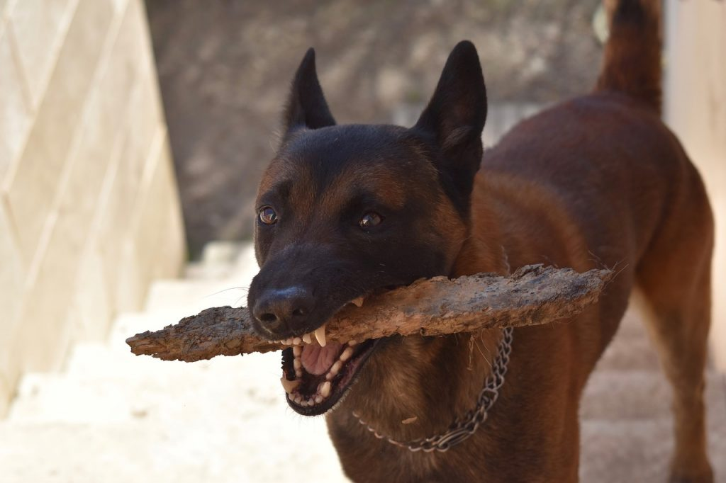Dog with a stick.