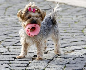A dog with donut toy.