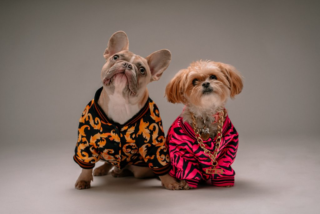 Two dogs dressed up.