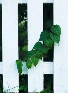 White fence with leaves.