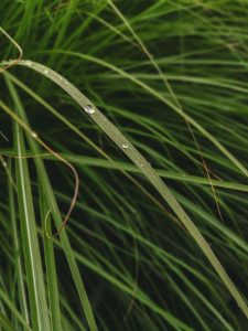 Grass with water droplet.