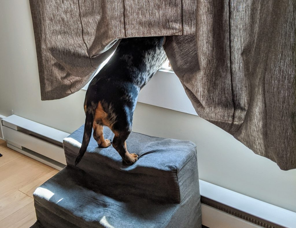 A dog looking outside on window.