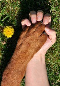 Holding dog's paw.