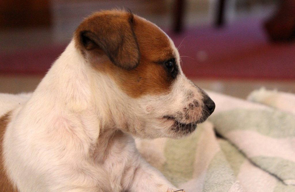 Puppy in sideview.