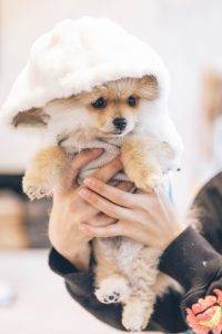 Puppy wearing a hoodie.