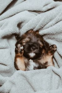 Puppy sleeping with paws up.