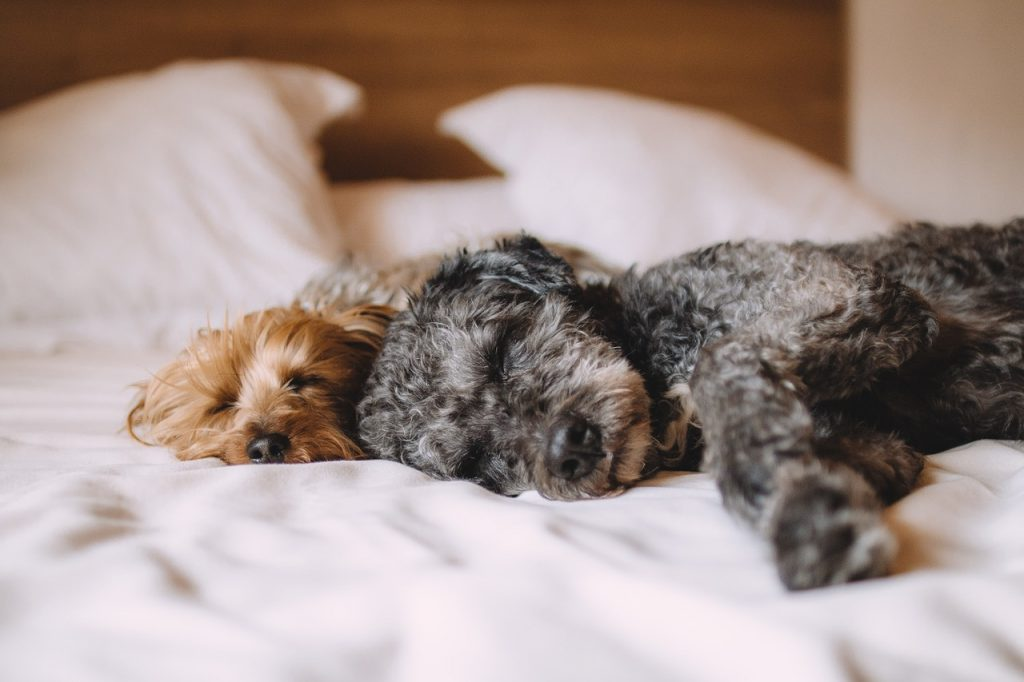 Two dogs sleeping on bed.