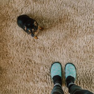 Person standing and a dog on carpet.