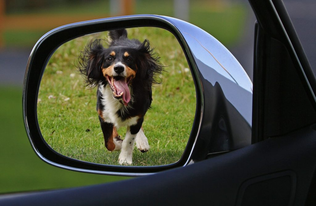 Dog running as seen at side mirror.