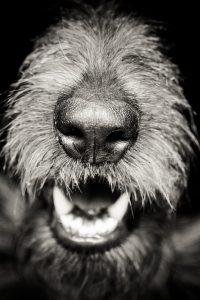 Dog's nose and mouth.