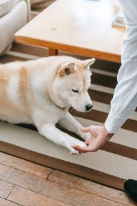 A person holding dog's paw.