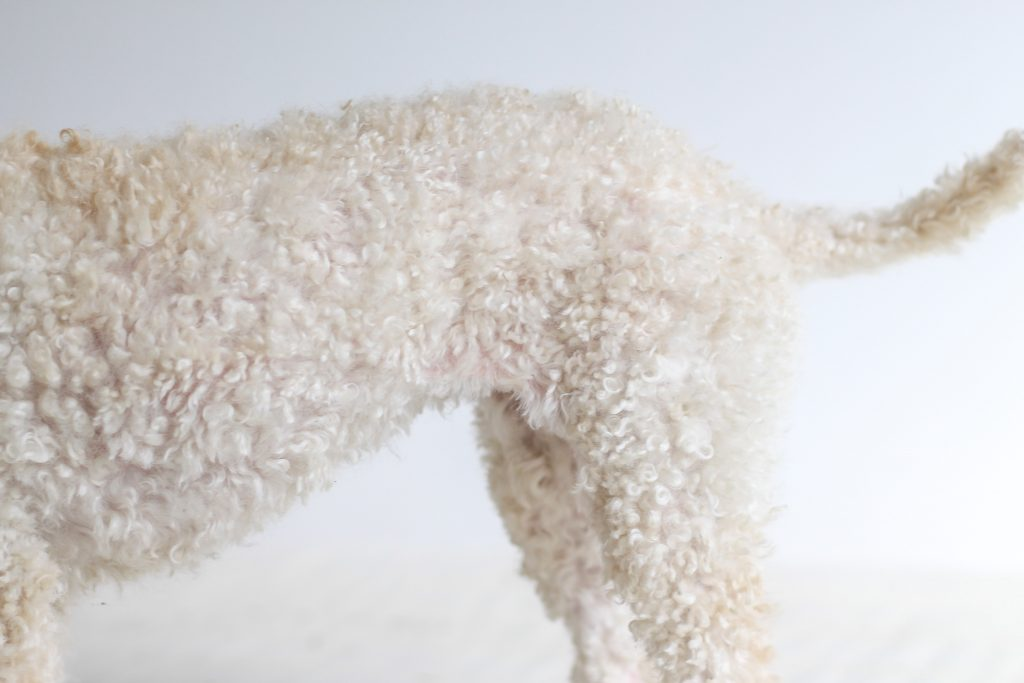Poodle body.