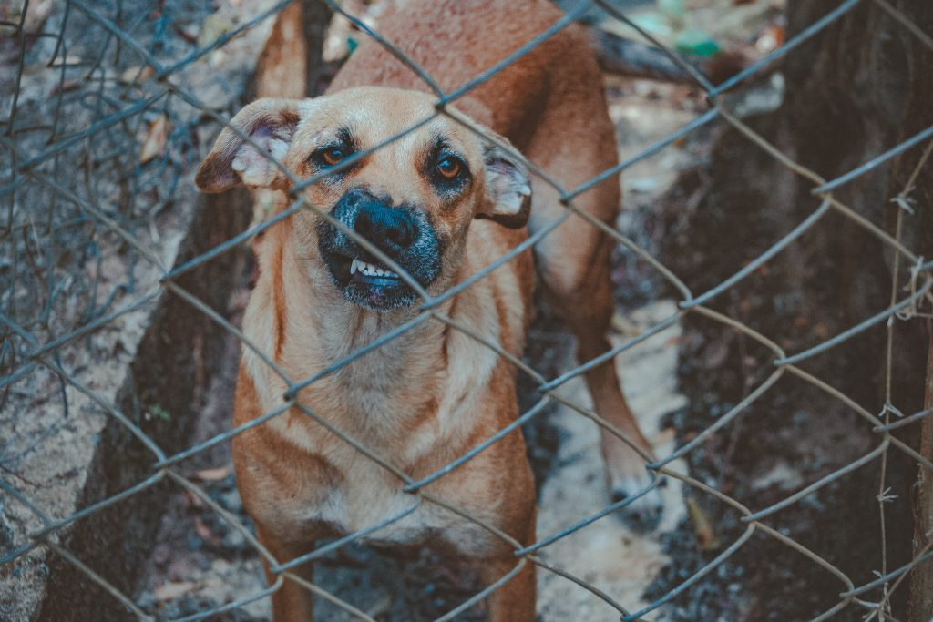 Angry dog by wired fence.