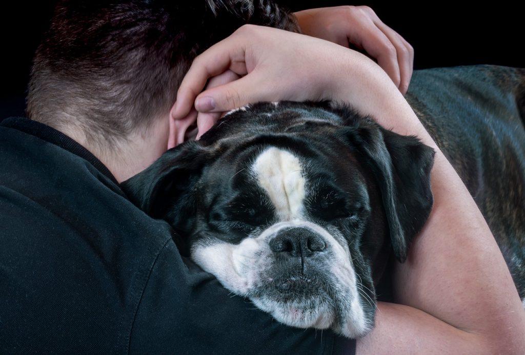 Dog being hugged.