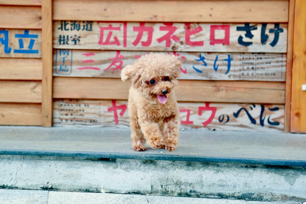 Dog standing by Japanese signs.