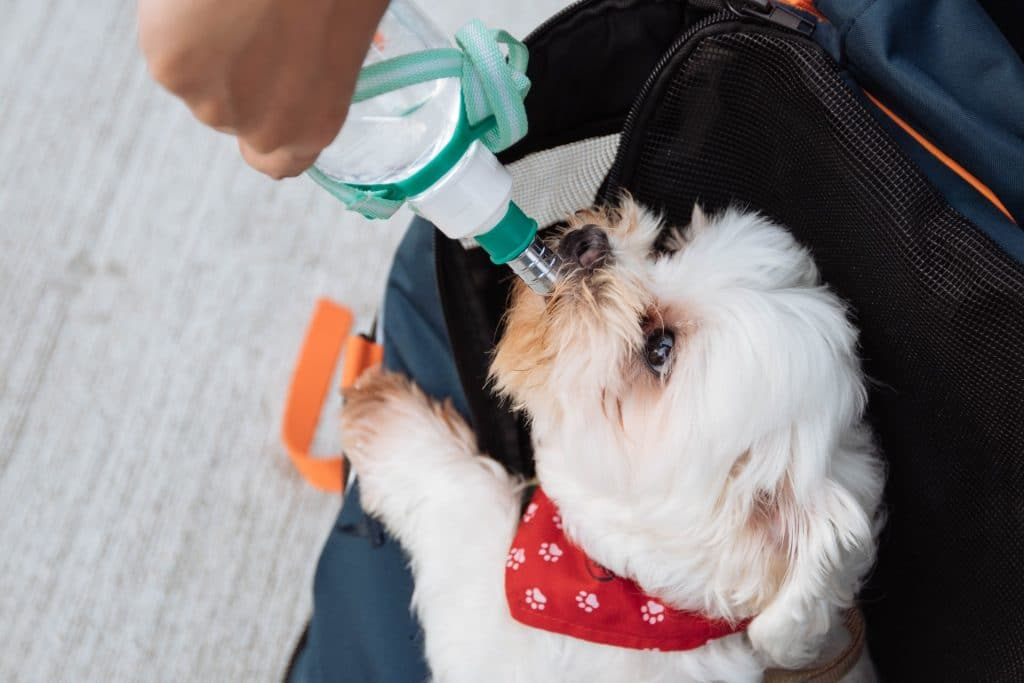 Dog drinking from a bottle.