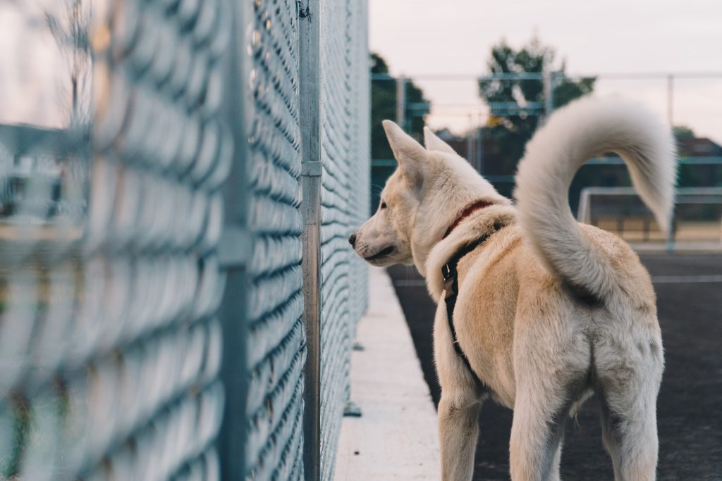 A dog peeking by wired fence.