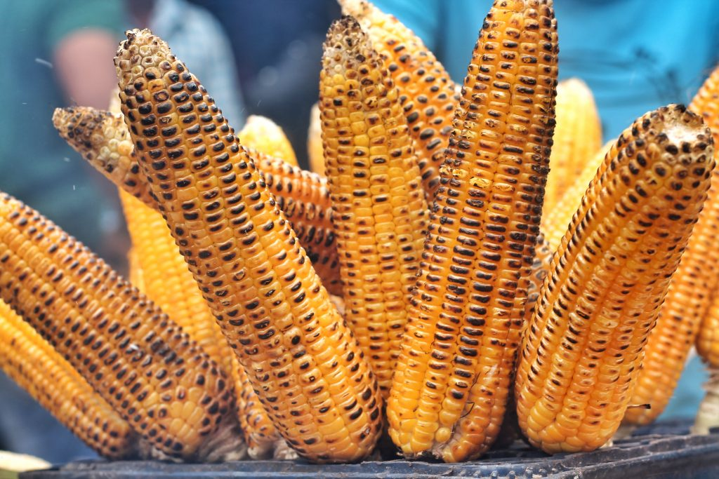 Grilled corn cobs.