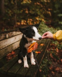 Puppy on bench in fall.
