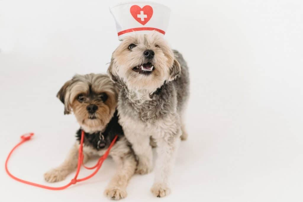 Two dogs dressed in medical staff.