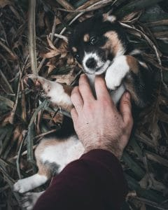 Puppy being belly rubbed.